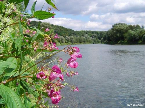 ...San .... #rzeka #San #lato