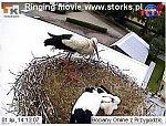 http://images25.fotosik.pl/13/2640533a1bf4630em.jpg