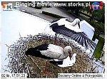 http://images25.fotosik.pl/14/379aeba8f6ef7415m.jpg