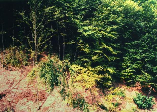 Dziwny las w drodze do Kljuća, Bosnja #drzewa #dziwny #las #zarośla