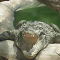 #krokodyl #zwierzeta #zoo