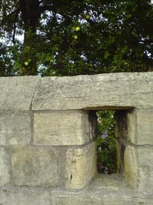 #mur #jablka