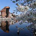 Wiosenny Żuraw. #Gdańsk #Żuraw