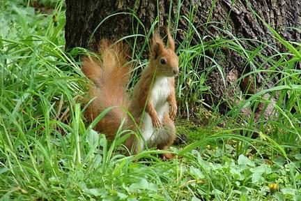 #wiewiórka #las #LeśneZwierzęta #gryzoń
