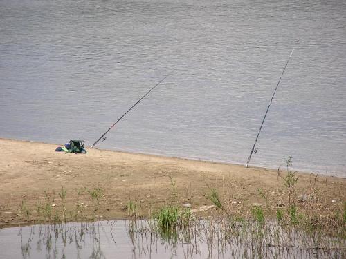 Ryby same sie lowia #wędka #ryby #łowienie #ŁowienieRyb