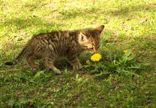 Maciek lubi kwiatki? #kot #kocurek #koty #Maciek