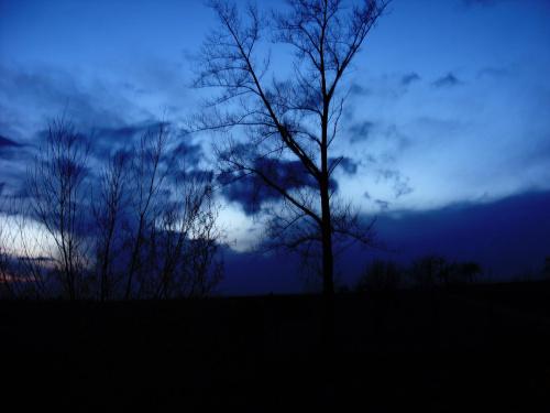 Niebiańskie niebo... W natchnieniu nocy... #drzewo #topola #niebo #pejzaż #widok #horyzont