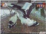 http://images25.fotosik.pl/228/ce8edd5965440bd1m.jpg