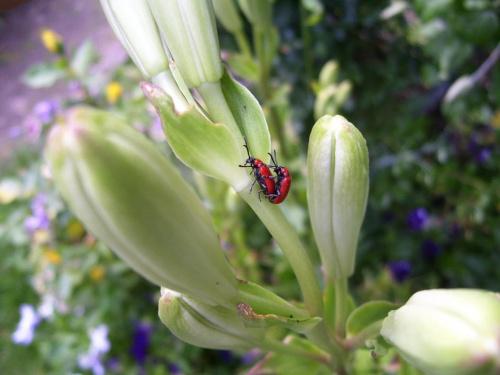 Bez komentarza... #kwiat #owad #lato #miłość