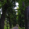 ścieżka #ścieżka #drzewa #park #Łańcut