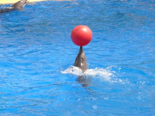Delfiny jak zawsze niesamowite #Marineland