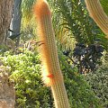 Rosną tutaj egzotyczne kaktusy #MonacoIMonteCarlo