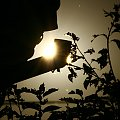 W objęciach słońca #słońce #promienie #cień #rynna