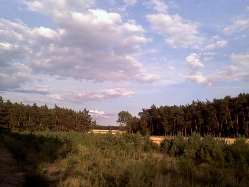 Widoczek z lasu mojego taty:) #krajobrazy