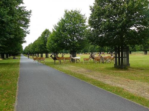 Bushy Park - daniele #Hampton #Londyn