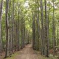 Szlak na Równicę #Góry #Las #BeskidŚląski #Równica #Ścieżka