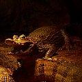 co to jest szczery uśmiech :DD #krokodyl #zoo #wrocław #zwierzęta