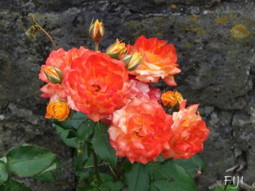 Kwiaty #Roślinność