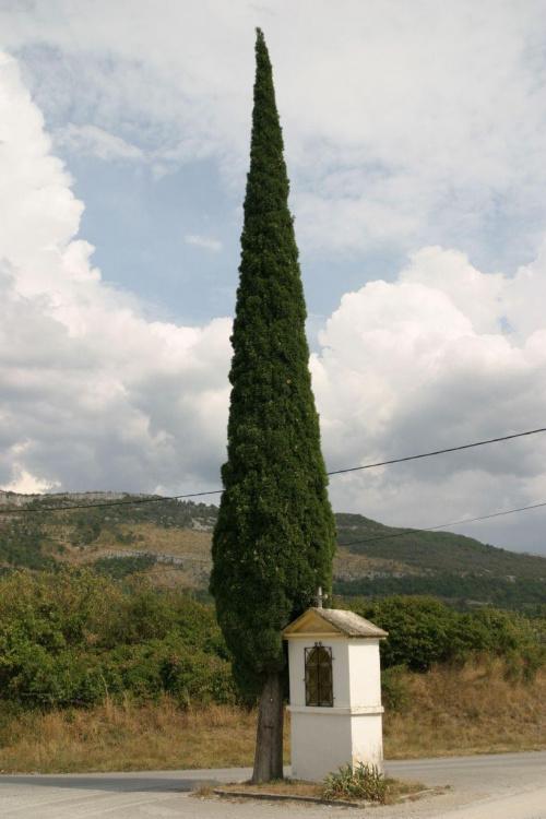 Cyprysy i kapliczki towarzyszyły nam na słoweńskich drogach cały czas. #Słowenia #kapliczka #cyprys
