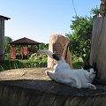 Zaburzenia w grawitacji #Kot #koty #zwierzęta #ciekawe #śmieszne #zabawne #fajne #humor