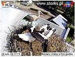 http://images25.fotosik.pl/5/7ded7e1fbdb75526m.jpg