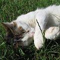 Ten kot ma chyba dosyć #Kot #koty #zwierzęta #ciekawe #śmieszne #zabawne #fajne #humor