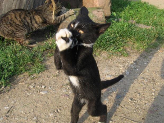 Zabawny kotek #kot #koty #zwierzęta