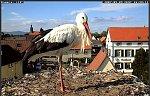 http://images25.fotosik.pl/77/ed9cd65e6ec189b0m.jpg