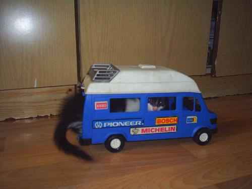 Kot w samochodzie. #KotSamochódŚmieszne