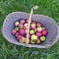 #jablka #JablkaWKoszyku #koszyk