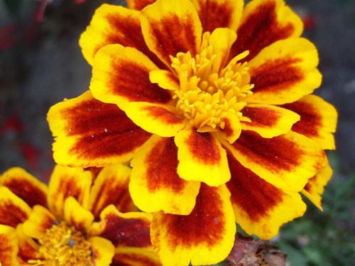 Kwiat #kwiat #roślina