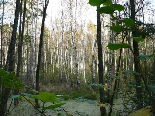 #stawiski #las #zalew #drzewa #woda #natura