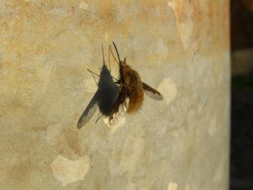 #owady #zwierzęta
